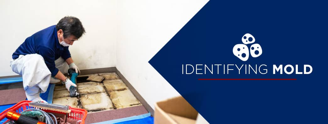 a home climates employee identifying mold