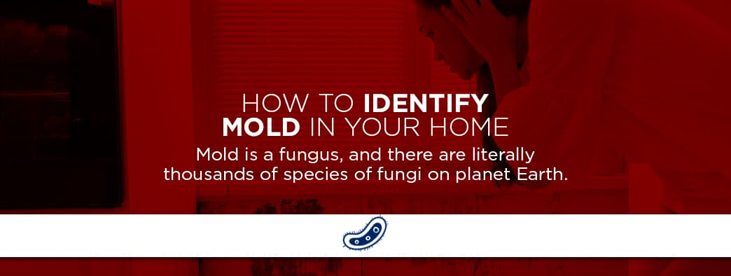 how to spot mold in your home