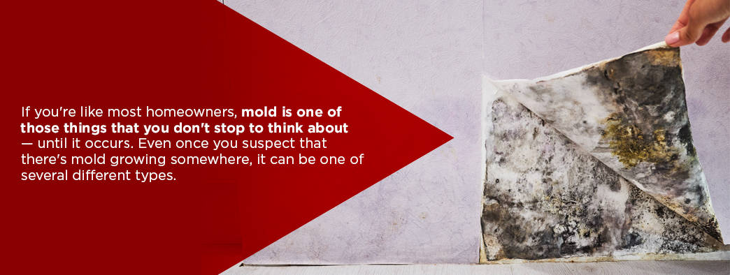 10 tips you didn't know about mold