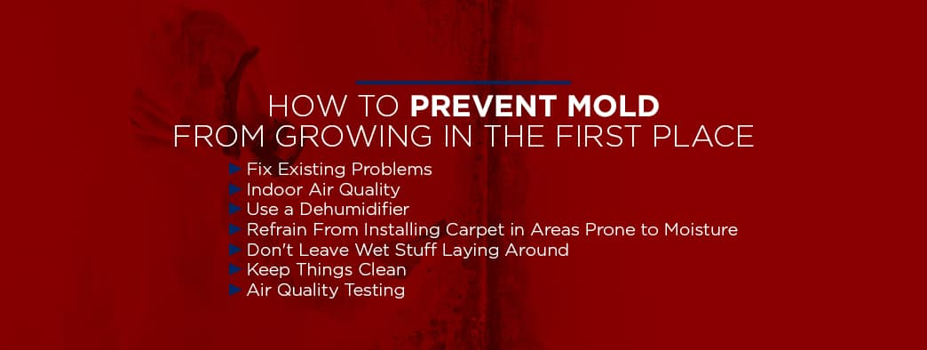 prevent mold from growing